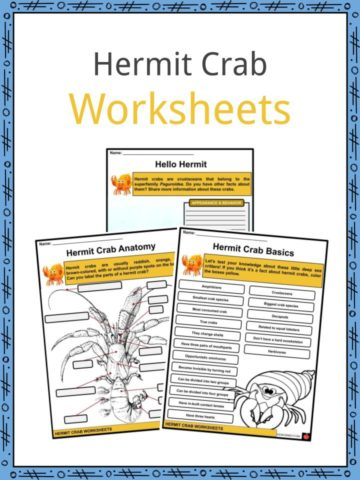 Hermit Crab Worksheets