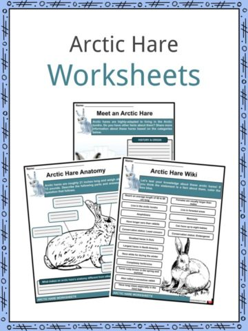 Arctic Hare Worksheets