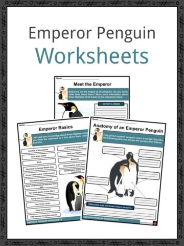 Emperor Penguin Worksheets