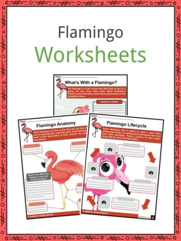 Flamingo Worksheets