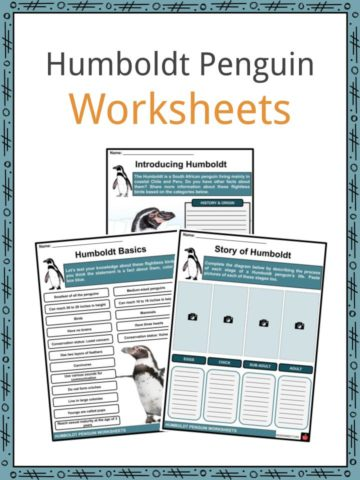 Humboldt Penguin Worksheets