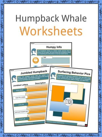 Humpback Whale Worksheets