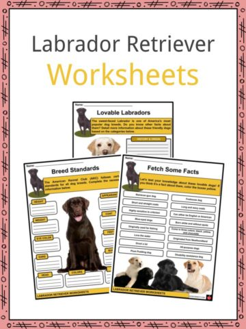 Labrador Retriever Worksheets