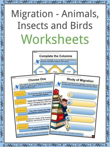 Migration - Animals, Insects and Birds Worksheets