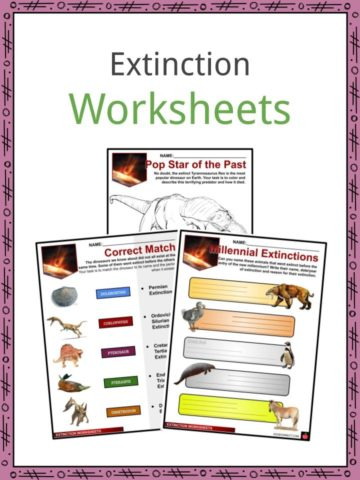 Extinction Worksheets