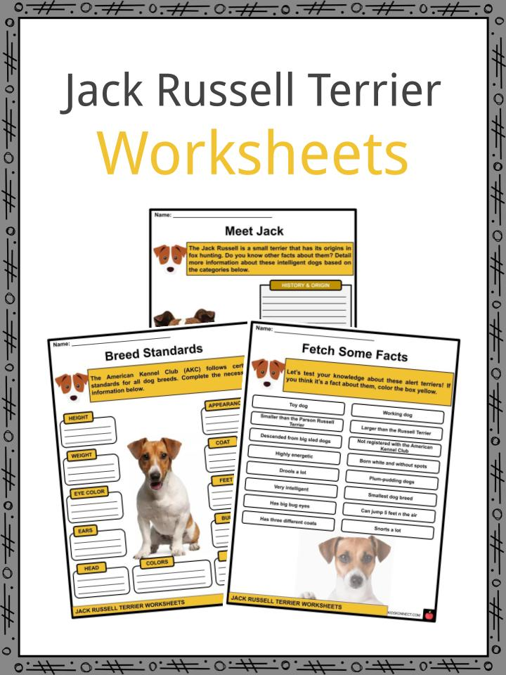 Jack Russell Terrier Worksheets