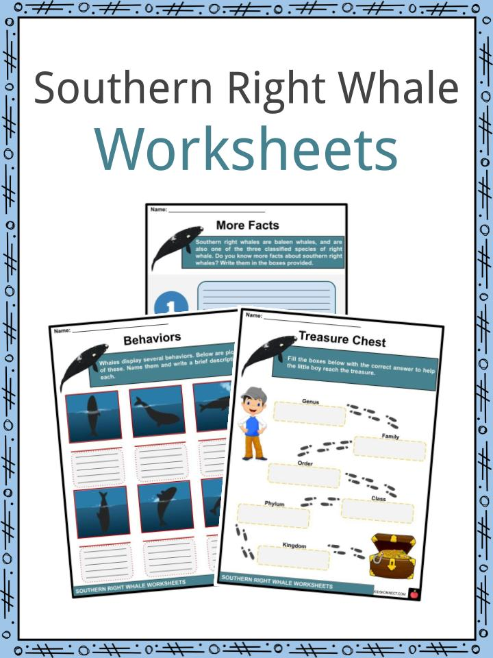 Southern Right Whale Worksheets