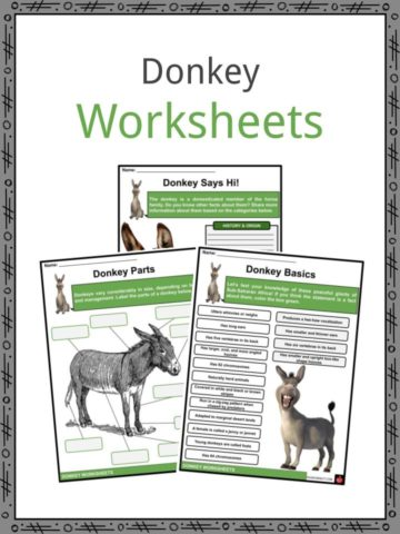 Donkey Worksheets