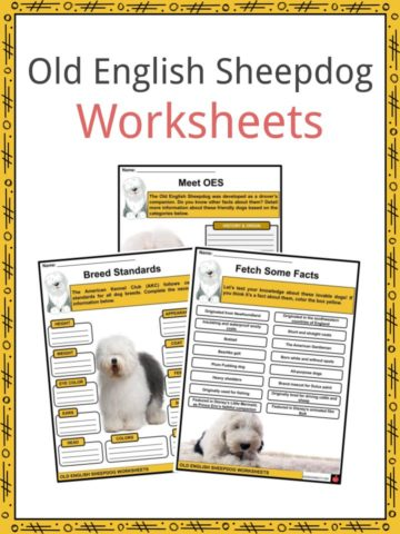 Old English Sheepdog Worksheets