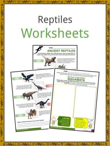 Reptiles Worksheets