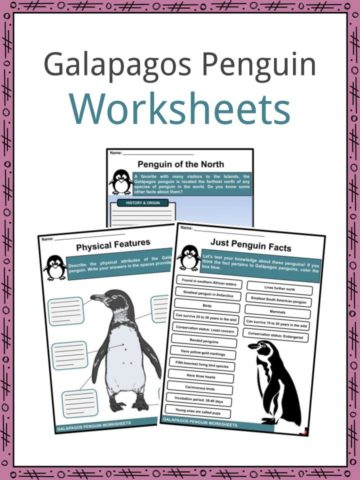 Galapagos Penguin Worksheets