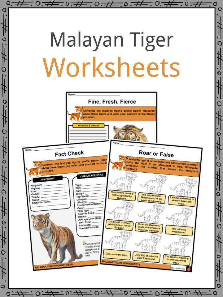 Malayan Tiger Worksheets
