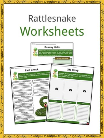 Rattlesnake Worksheets