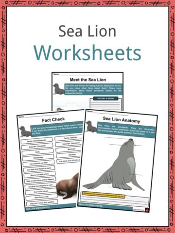 Sea Lion Worksheets