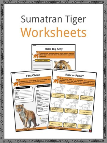 Sumatran Tiger Worksheets