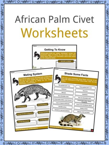 African Palm Civet Worksheets