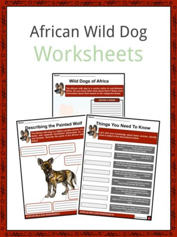 African Wild Dog Worksheets