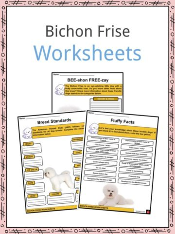 Bichon Frise Worksheets