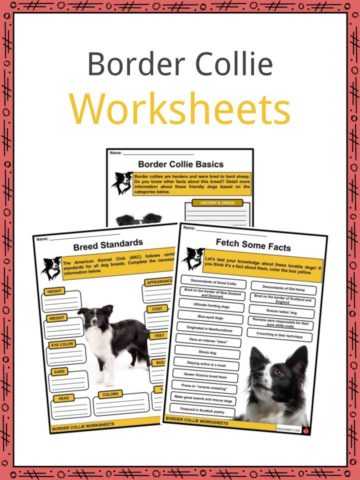 Border Collie Worksheets