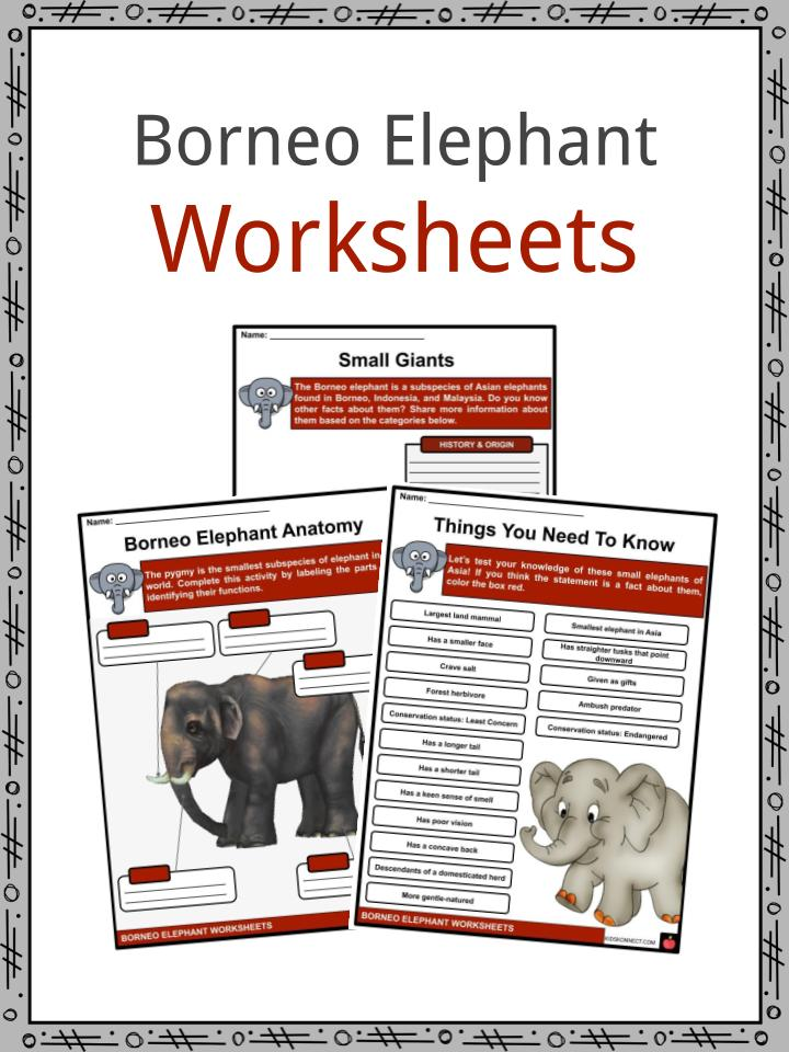 Borneo Elephant Worksheets