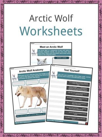 Arctic Wolf Worksheets