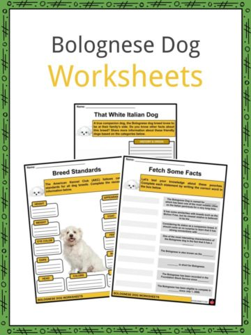 Bolognese Dog Worksheets