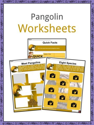 Pangolin Worksheets