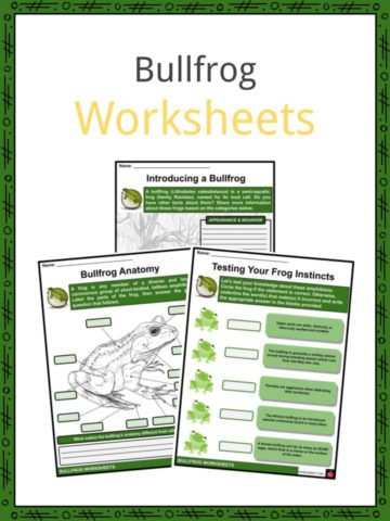 Bullfrog Worksheets