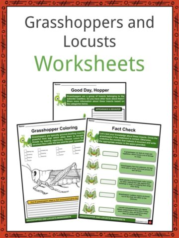 Grasshoppers and Locusts Worksheets