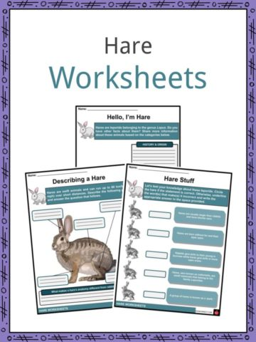 Hare Worksheets