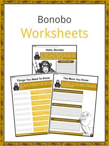 Bonobo Worksheets