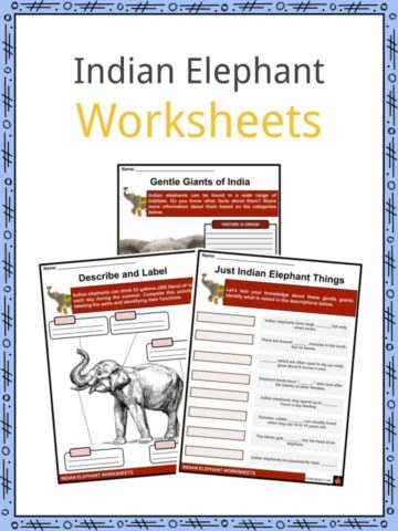 Indian Elephant Worksheets