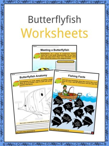 Butterflyfish Worksheets