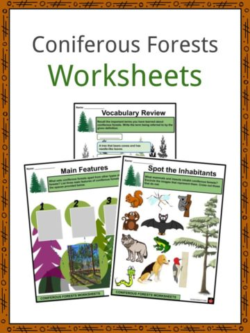 Coniferous Forests Worksheets