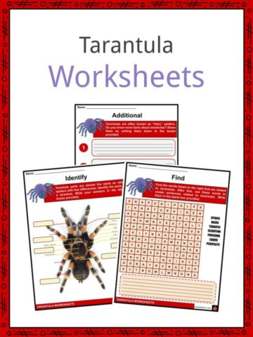 Tarantula Worksheets