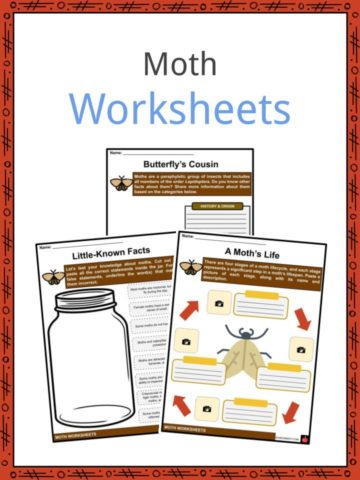 Moth Worksheets
