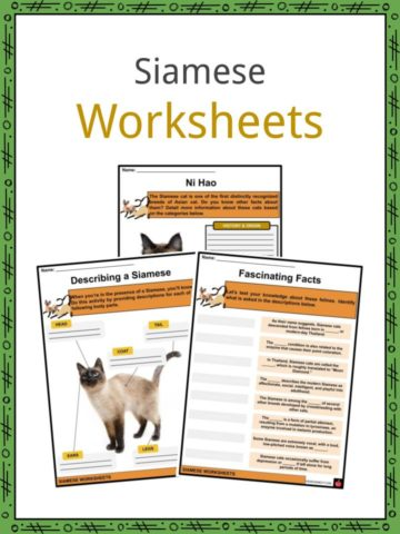Siamese Worksheets