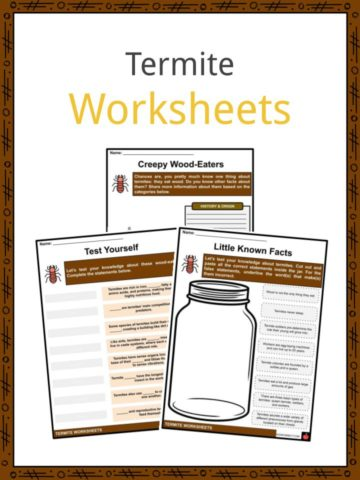 Termite Worksheets